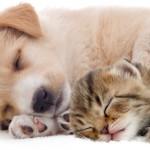 コストコ人気商品【ペット用品~猫&犬~】おすすめ≪6品≫とは!?