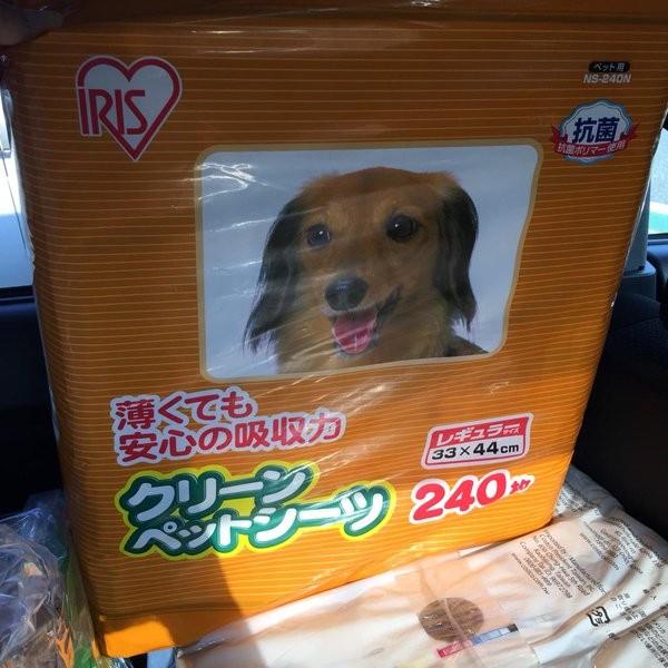 コストコ 人気商品 ペット用品 猫 犬 おすすめ
